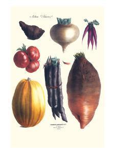 Vegetables; Tomato, Raddish, Sweet, Pumpkin, Carrots, Yam by Philippe-Victoire Leveque de Vilmorin