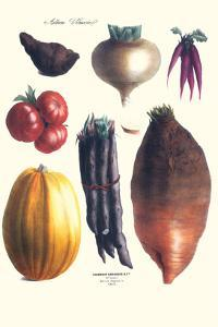 Vegetables; Tomato, Raddish, Sweet, Pumpkin, Carrots, Yam by Philippe-Victoire Leveque de Vilmorin