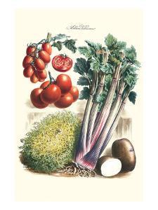 Vegetables; Tomato Varieties, Celery, and Potato by Philippe-Victoire Leveque de Vilmorin