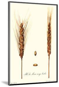 Wheat by Philippe-Victoire Leveque de Vilmorin