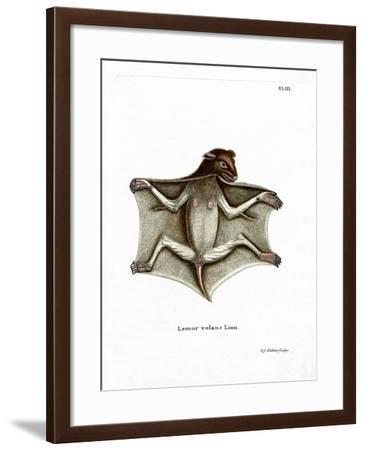 Philippine Flying Lemur--Framed Giclee Print
