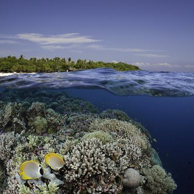 Philippine Pangalo Reef Scene with Butterflyfish and Balicasag Island, Digital Composite-David Fleetham-Photographic Print