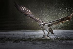 Deadly Catch by Phillip Chang