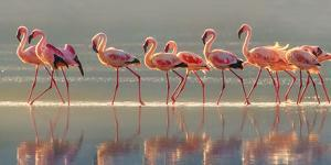 Flamingo by Phillip Chang