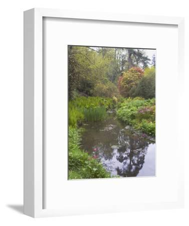 Large Pond with Candelabra Primula and Acers in the Spring, Minterne, Dorset