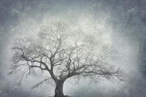 textured nature by Phillipe Manguin