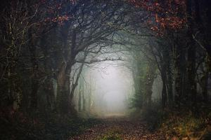 The scary forest by Phillipe Manguin