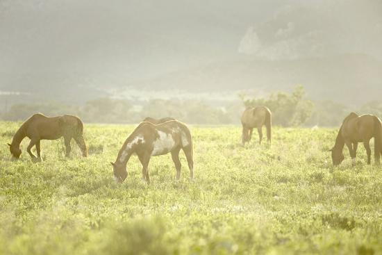 Philmont Scout Ranch Horses at Pasture before Sunset. Cimarron, New Mexico-Maresa Pryor-Photographic Print
