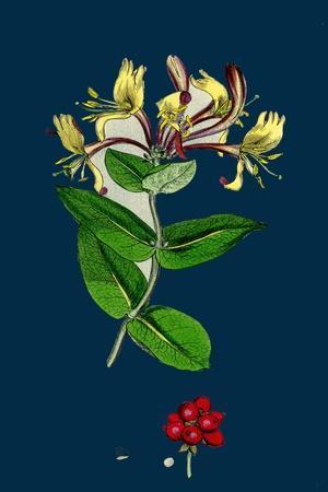 https://imgc.artprintimages.com/img/print/phleum-pratense-var-genuinum-common-timothy-grass-var-a_u-l-pvepsw0.jpg?p=0