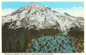 Phlox on Mt. Rainier, Washington
