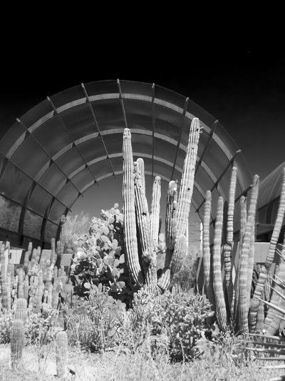 Phoenix Botanical Gardens, Arizona,USA-Anna Miller-Photographic Print