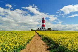 Oil Seed Rape at Happisburgh Lighthouse by Photo by Andrew Boxall