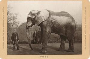 Photo of Jumbo the Elephant