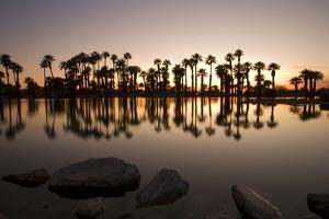 Oasis by Photographed by Randi Ang