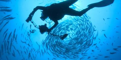 Photographer David Doubilet Swims in the Pacific Reef at Kimbe Bay-David Doubilet-Photographic Print