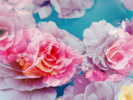 Photographic Layer Work from Blossoms in Water-Alaya Gadeh-Photographic Print