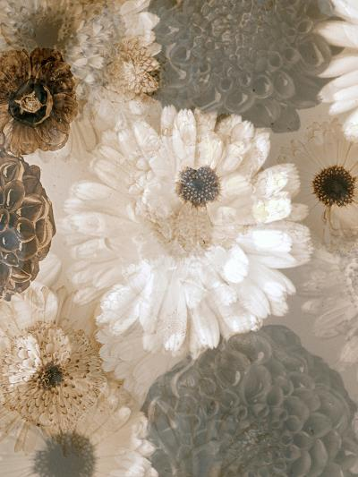 Photographic Layer Work from White and Brown Blossoms-Alaya Gadeh-Photographic Print