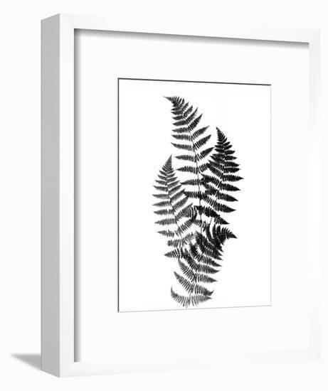 Photographic Study Of Fern Leaves-Bettmann-Framed Photographic Print