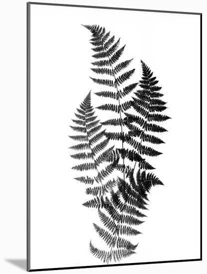 Photographic Study Of Fern Leaves-Bettmann-Mounted Photographic Print