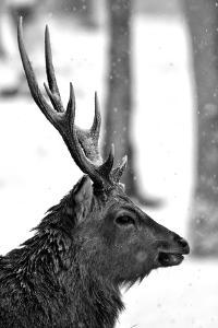 Buck by Photography by Daniel Hans Peter Christensen