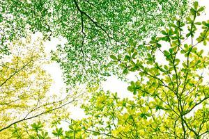 Early Spring Green. by Photography by Mijang Ka