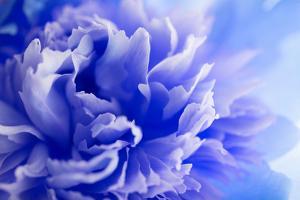 Blue Flower by PhotoINC
