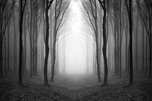Dark Woods by PhotoINC