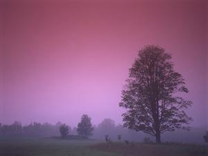 Evening Fields by PhotoINC