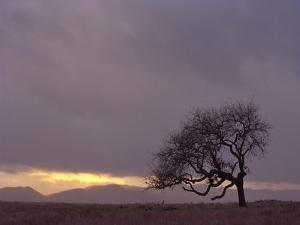 Field by PhotoINC