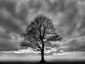 Great Tree by PhotoINC