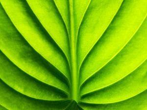Green Design by PhotoINC