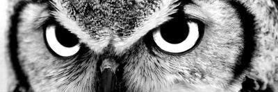Tiger-PhotoINC-Framed Premier Image Canvas