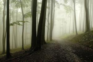 Road Through the Woods by PhotoINC