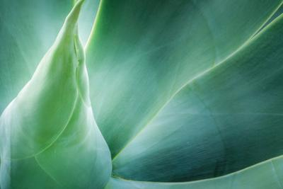 Agave by PhotoINC Studio