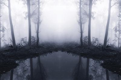 Forest Mist by PhotoINC Studio