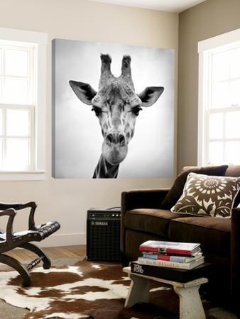 Giraffe by PhotoINC Studio