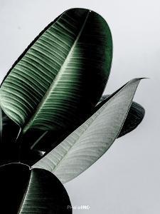 Greenish by PhotoINC Studio
