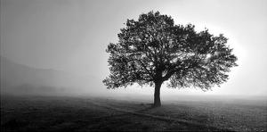 Tree in Mist by PhotoINC Studio