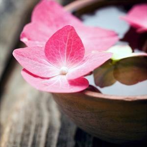 Zen Bowl by PhotoINC Studio