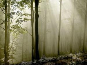 Sun Rays in the Wood by PhotoINC