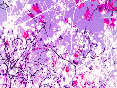 Photomontage of Trees in Purple Tones-Alaya Gadeh-Photographic Print