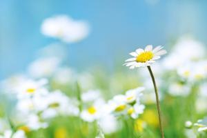 Flowers by photoslb com
