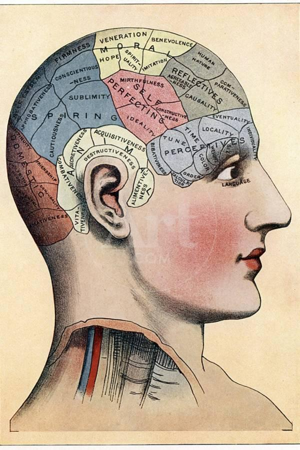 Phrenology Chart Showing Presumed Areas Of Activity The Brain C1920