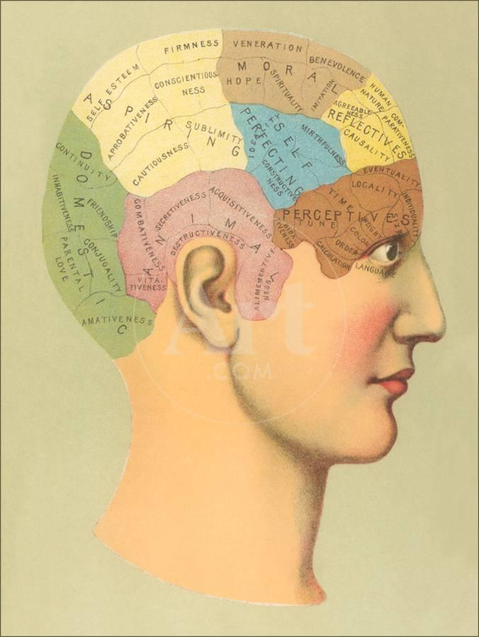 Phrenology Chartby Found Image Press