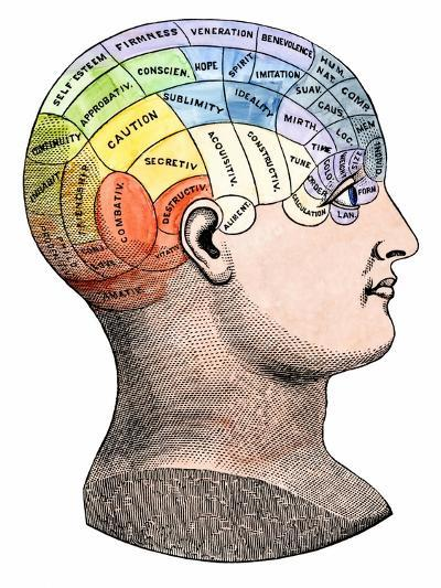 Phrenology Model of the Locations of the Various Organs of Mind in the Human Head--Giclee Print