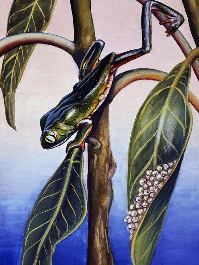 Phyllomedusa Iheringii, Hylidae, Drawing--Giclee Print