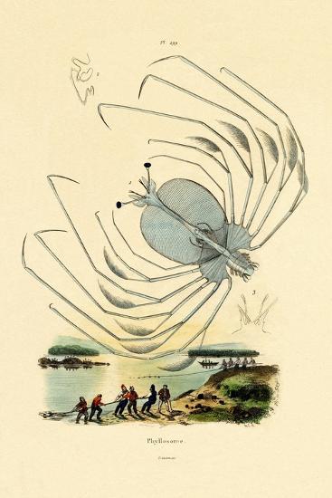 Phyllosome, 1833-39--Giclee Print
