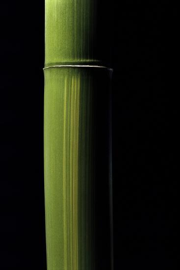 Phyllostachys Viridis (Houzeau Bamboo)-Paul Starosta-Photographic Print