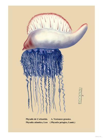 Physalie de l'Atlantide--Art Print