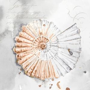 Blush Shell Ii by PI Creative Art
